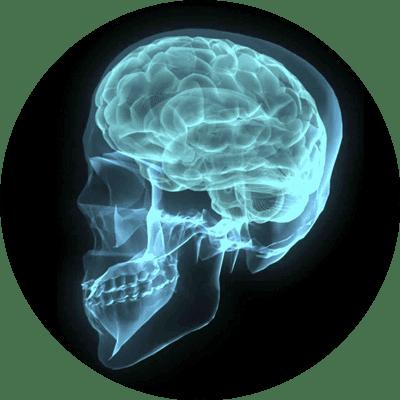 Drug addicted brain