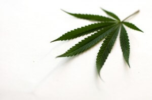 marijuana dependency